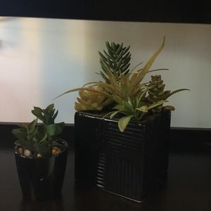 2 Decorative plants
